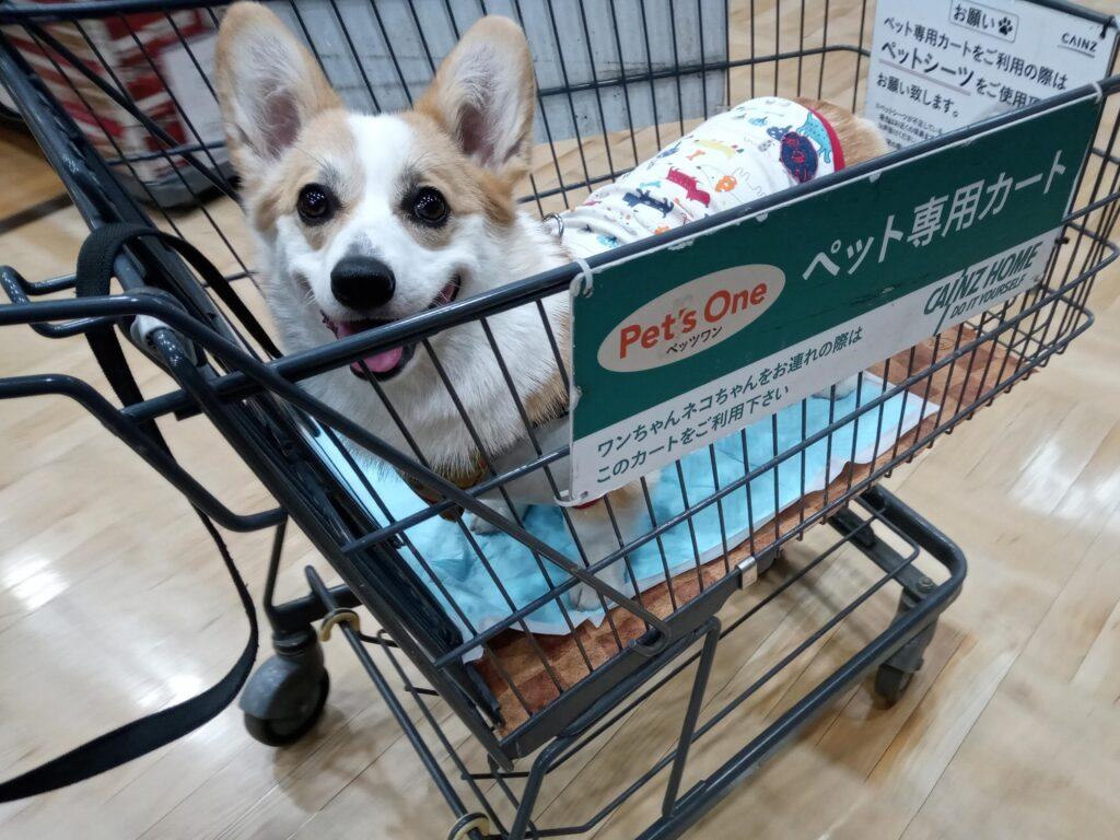 カインズ昭島店のペット専用カートでニコニコなコーギー