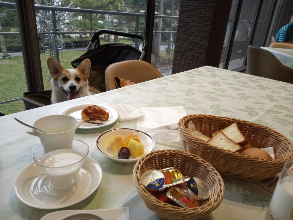 八ヶ岳わんわんパラダイスの朝食にコーギーを同伴