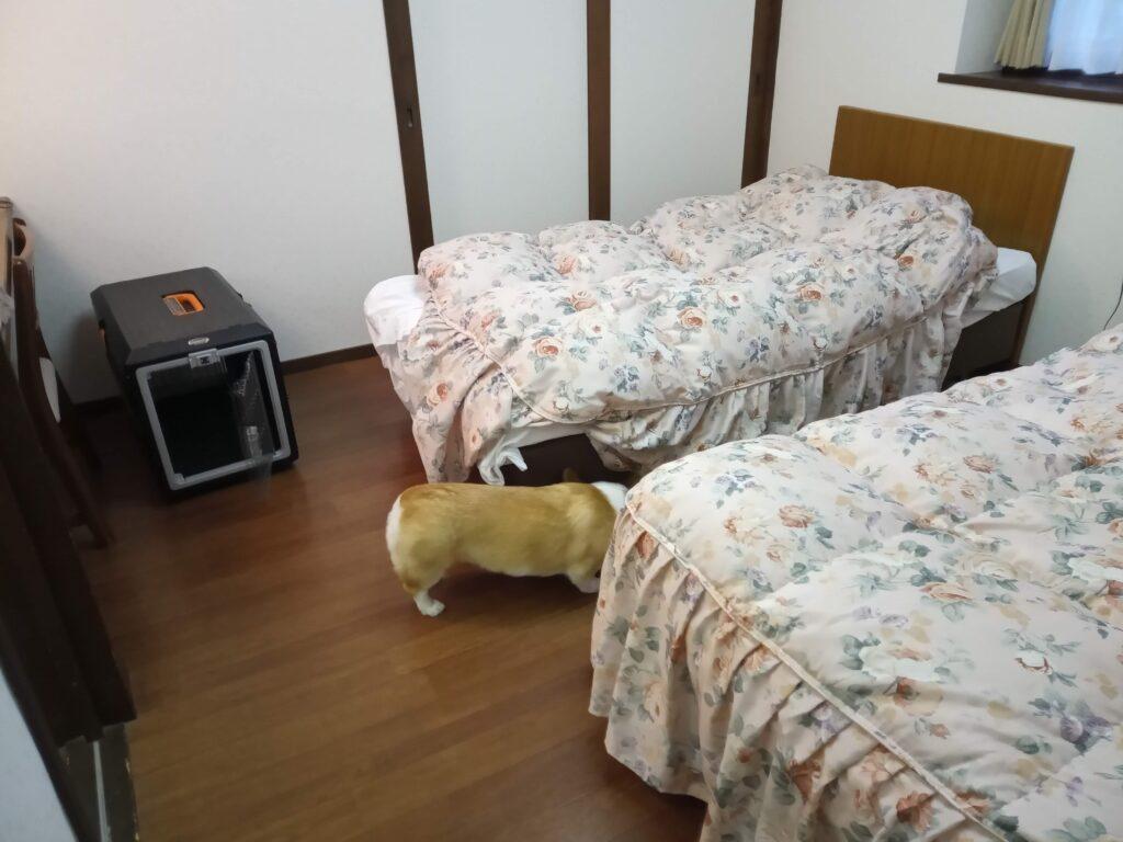 寝室にクレートを設置