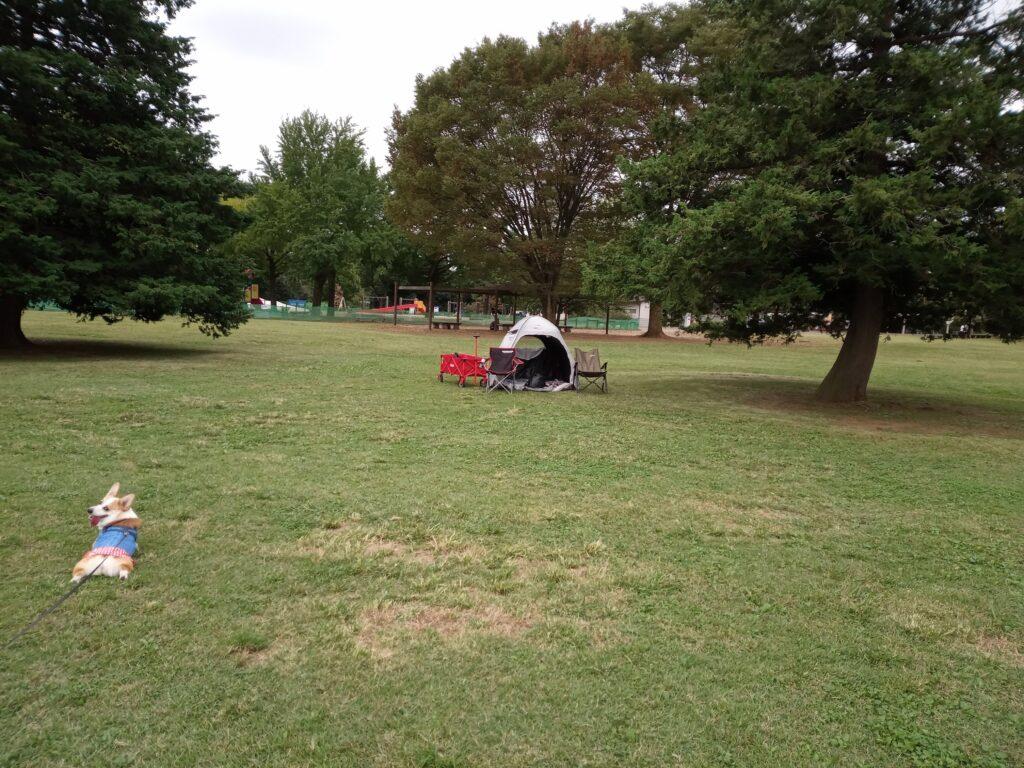 テントと椅子とコーギー(遠くから)